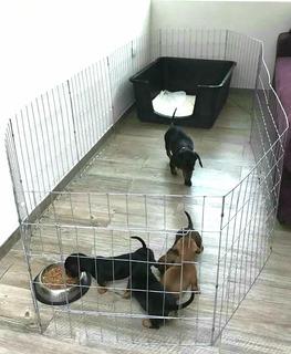 Corral Para Perro 60cm Alto 6 Paneles Oferta Dog Pen Play