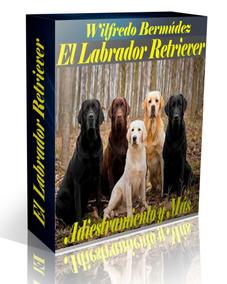 El Labrador Retriever Adiestramiento Y Más.