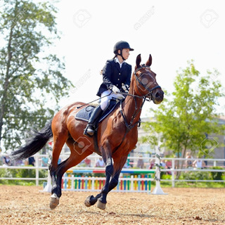 Casco Equitacion Modelos Y Tallas Varias