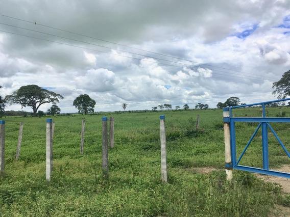 700 Has Venta De Finca Ganadera O Agrícola En Ospino Meb