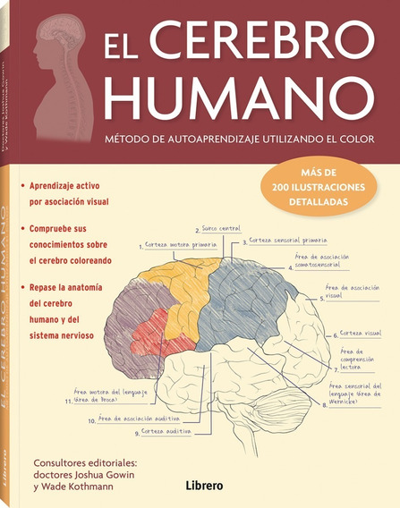 El Cerebro Humano. Método De Autoaprendizaje Usando Color