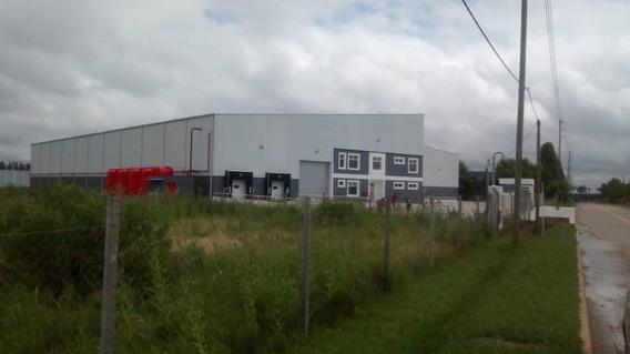 Excelente Planta Industrial / Logística Calle Del Gasoducto Parcela 27a 5.000 M²