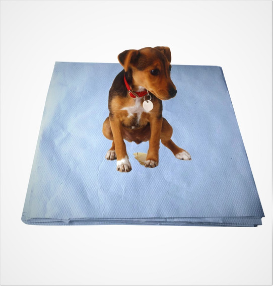Tapete Pet Papel Reciclado Para Cachorro 60 X 60 Cm 250 Uni