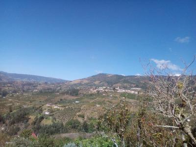 Finca Para Cultivar Municipio De Nuevo Colón Boyacá