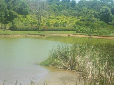 Sítio Rural À Venda, Água Espraiada (caucaia Do Alto), Cotia - Si0008. - Si0008