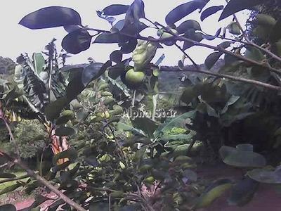 Chácara Maravilhosa, Com Arvores Frutíferas, Venda - Centro (são João Novo) - São Roque/sp - Ch0021