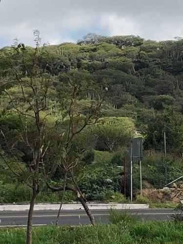 Venta Terreno Con Frente Av. Centenario Ejercito Mex 5 Has