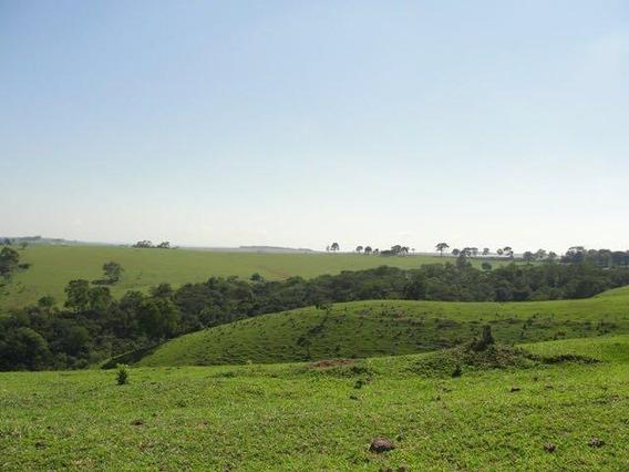 Fazenda Para Venda Em Itapeva, Centro - 851