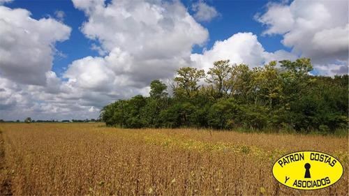 Imagen 1 de 9 de 2226-mb- 55 Has Agricolas En Lujan