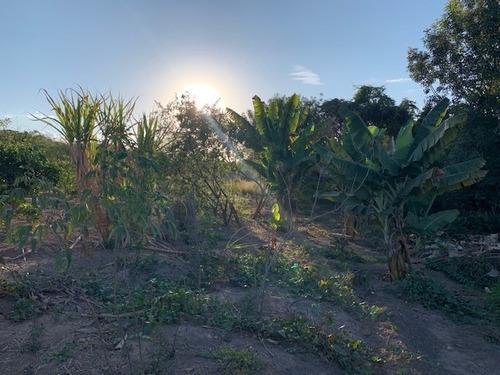 Imagem 1 de 14 de Chácara 5.500mts, Pomar Formado E Casa Iniciada De 4 Cômodos