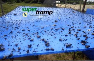 Rollos De Cinta De 100x24 Atrapa Insectos Para Cultivo