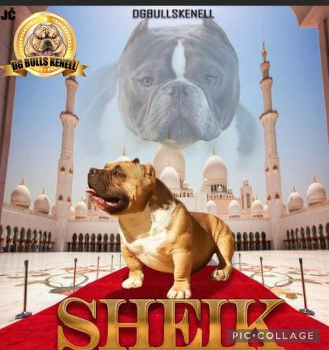 Imagem 1 de 2 de Estou Colocando 10 Coberturas Do Sheik Valor Promocional!