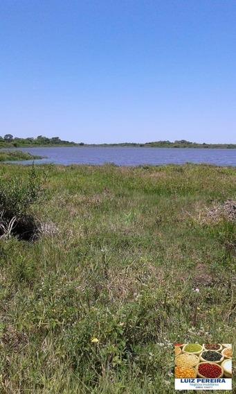 Fazenda A Venda Em Corumbá -ms-pantanal - De 5200 Hectares (pecuária) - 1342