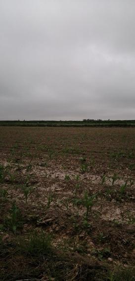 Alquilo Terreno Agricola