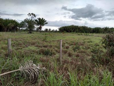 Propriedade Rural Na Região Roxinho