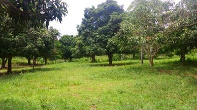 Fazenda A Venda Em Taboco - Ms (pecuária) - 781