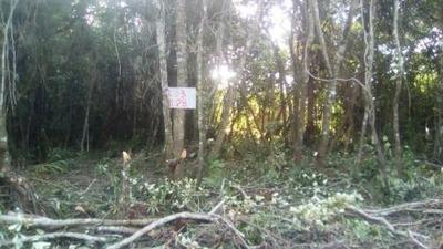 Excelente Terreno No Gaivota Em Itanhaém - Sp