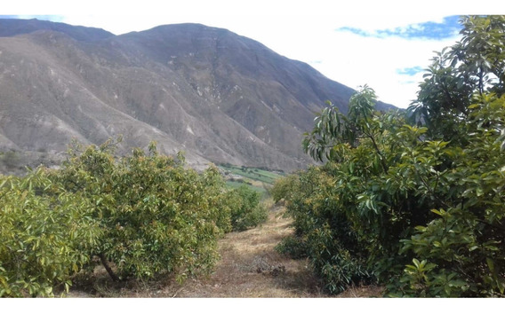 Vendo Linda Finca Con Plantación De Aguacate.