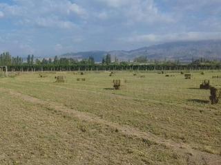 Fardos De Alfalfa Desde San Juan, Argentina