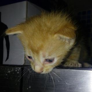 Gatitos En Adopcion Lindos