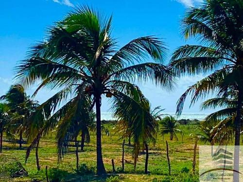Imagem 1 de 3 de Terreno Beira Mar A Venda São Miguel Do Gostoso