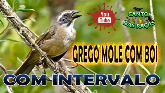 Cd - Trinca-ferro - Canto Grego Mole Com Boi P/ Encarte