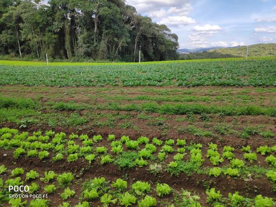 L. De 40 Mil Por 33 Mil. Terrenos Demarcados: Ibiúna