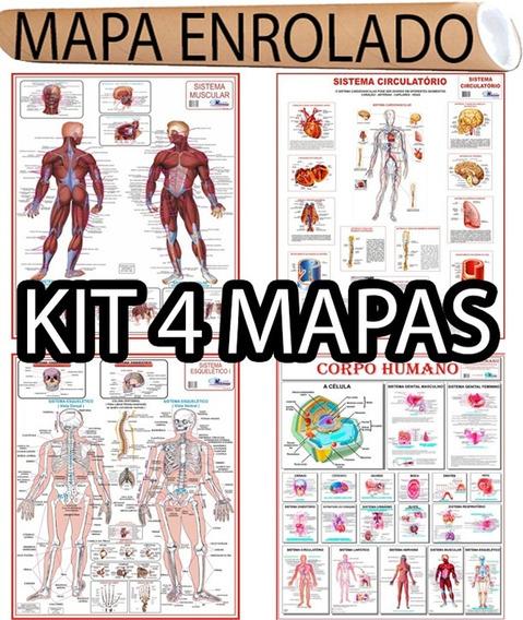 4 Mapa Corpo Humano Muscular Circulatório Esqueletico Medico