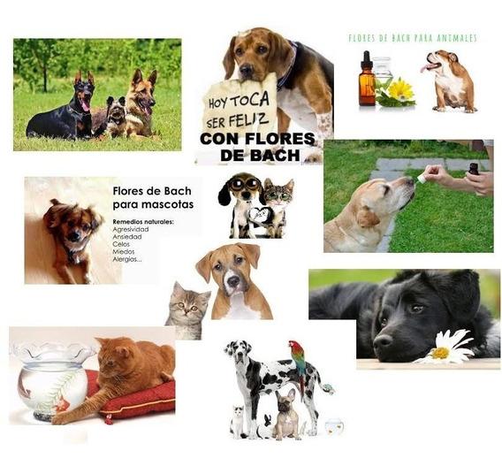 Flores De Bach Cartas Mascotas Vademecum Aprende Curs.varios