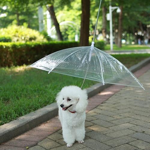 Paraguas Transparente Para Perros