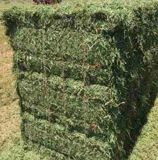 Heno De Alfalfa Y Ballica Verde En Fardo De 25 Kg