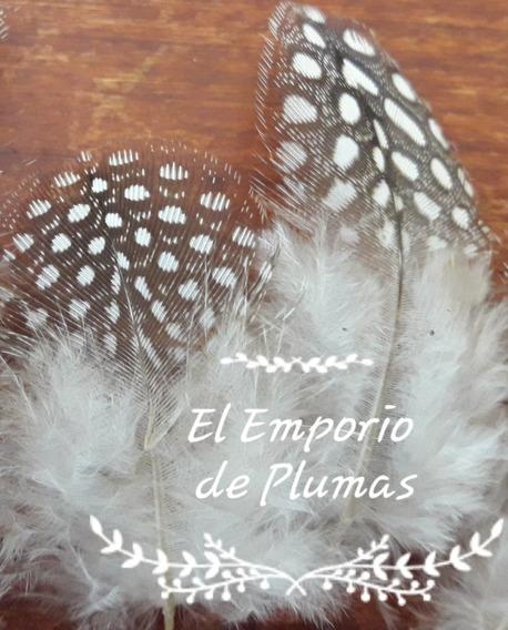 Plumas Naturales Con Lunares De Gallina De Ginea