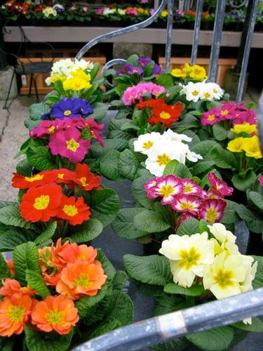 Activador Floral Para Todo Tipo De Plantas Florales