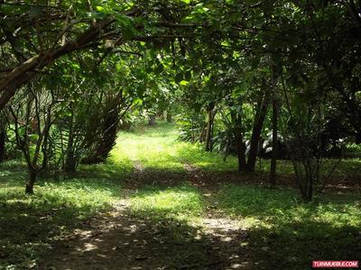 Haciendas - Fincas La Victoria