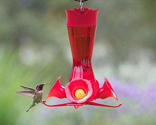 Bebedouro Americano Para Beija Flor Colibri Com Protetor Anti Abelhas E Anti Formigas