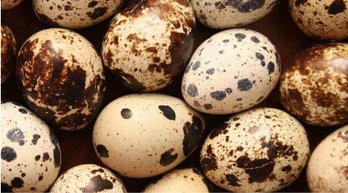 Huevos De Codorniz Fértiles Para Incubar