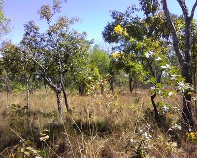 Fazenda Em Sandolândia To, Plantando 1.000 Hectares De Soja - 384