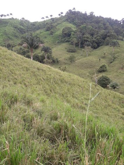 Hacienda Cacotera Y Ganadera 127 Hectareas Negociable