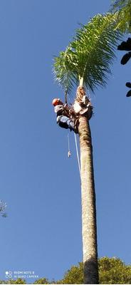 Poda E Corte Total De Árvores