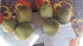 3 Frutas Maçã Elefante Saco De Adão Flor Cofre Reumatismo