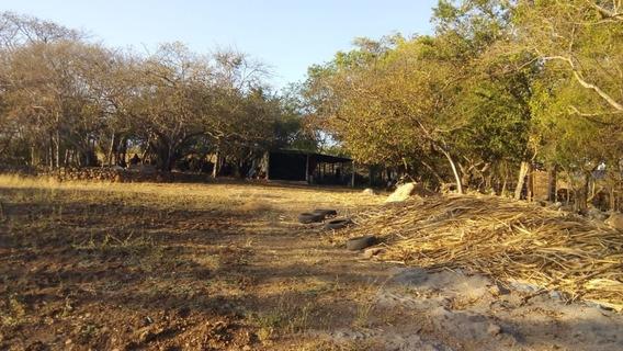 Terreno Para Cría De Ganado Ovino, Porcino, Aves; Con Servicio De Luz Y Concesión De Agua