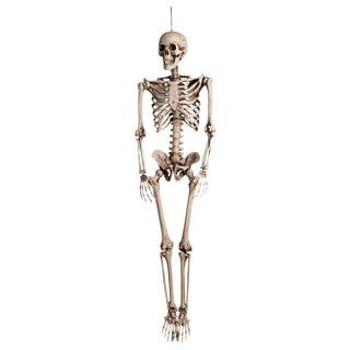 Esqueleto Corpo Humano 40 Cm Medicina Enfermagem Anatomia