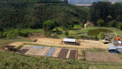 Fazenda No Sul De Minas, Cidade De Santa Rita Sapucaí Com 96,8 Ha, Com Café 24,2 Ha, Pasto , Eucalipto , Apenas 3,0 Klm Terra. - 3499