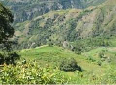 San Jose De Ocoa Sabana Larga Finca 223 Tareas