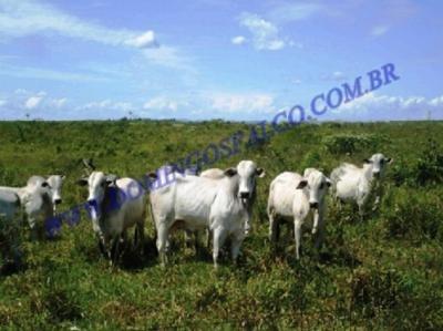 Venda - Fazenda - Zona Rural - Santana Do Araguaia - Pa - D8130
