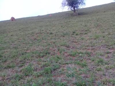 Sitio Com 33.000 M2 Em Baependi , Sul De Minas , 08 Klm Da Cidade , Ótimo Bairro , Bom De Água. - 4661