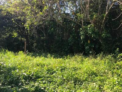 Solar En Palenque: Cerca Del Paso Del Tren Maya