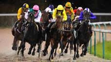 Consultoria Trader Cavalos E Bolsa Esportiva Betfair