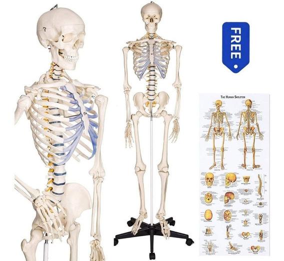Modelo De Esqueleto Humano Tamaño Real 1.80 Mt.
