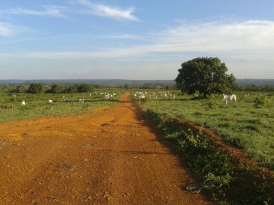 Fazenda Em Goiatins - To, Dupla Aptidão - 569